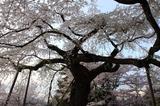 yasaka160406 028-3.JPG